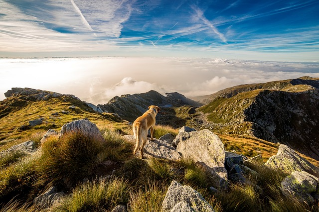 Experience Hiking with Your Dog